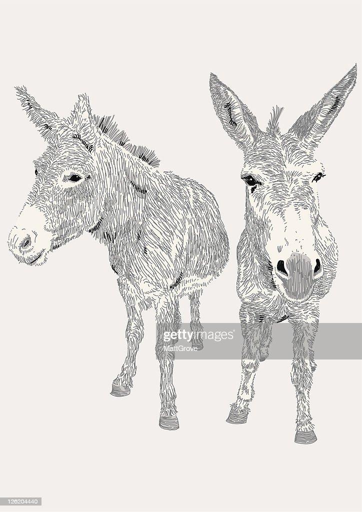 Dozy Donkeys : stock illustration