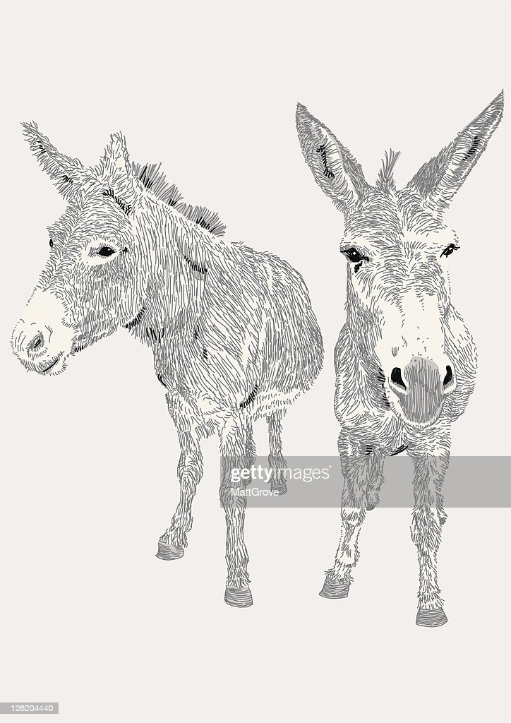 Dozy Donkeys