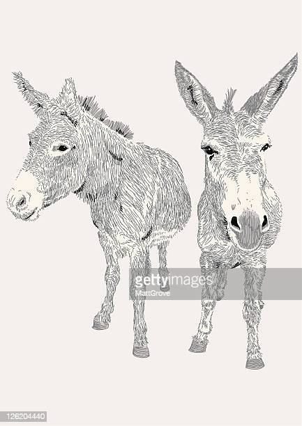 dozy donkeys - donkey stock illustrations