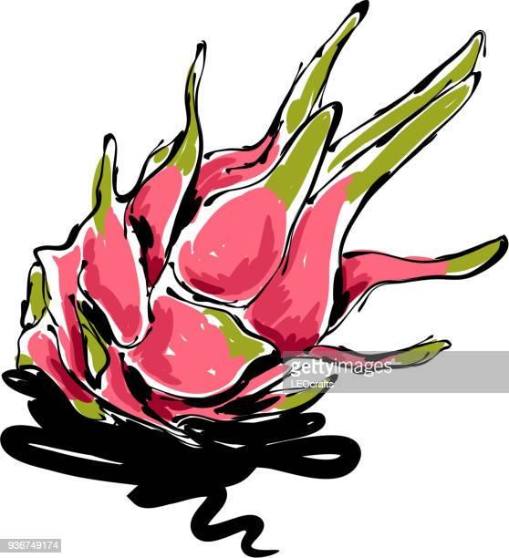dragon fruit drawing - dragon fruit stock illustrations