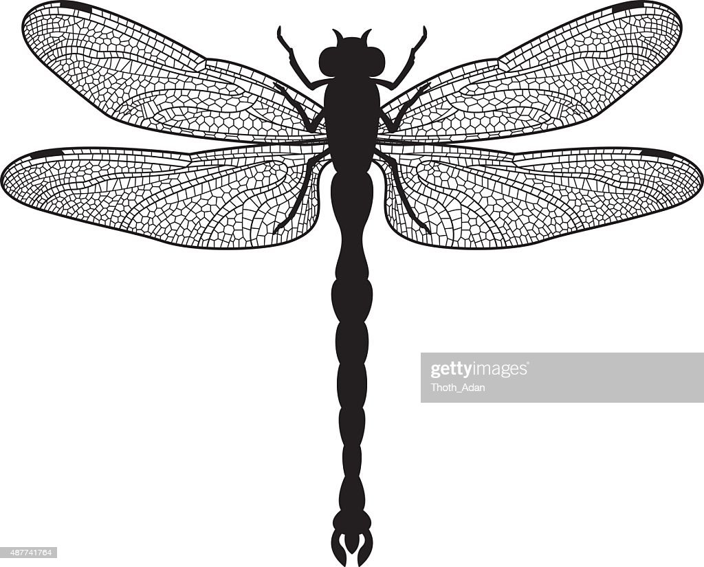 Dragonfly silhouette : stock illustration