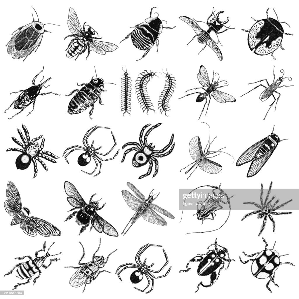 Dragonfly, small and big bug, fly, cicada, honey bee, wasp, flying ladybug and insects. Trendy embroidery stippling and hatching, shading style. Stipple art. Vector.