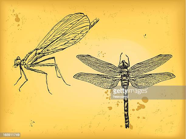 dragonfly - odonata stock illustrations, clip art, cartoons, & icons