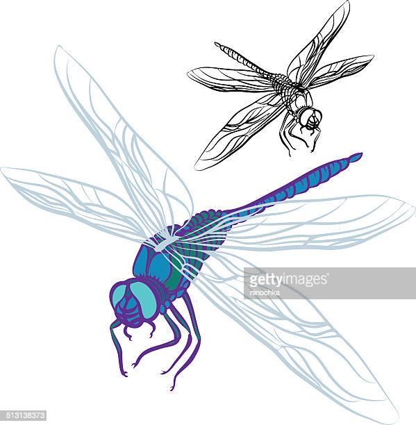dragonfly - odonata stock illustrations, clip art, cartoons, & icons