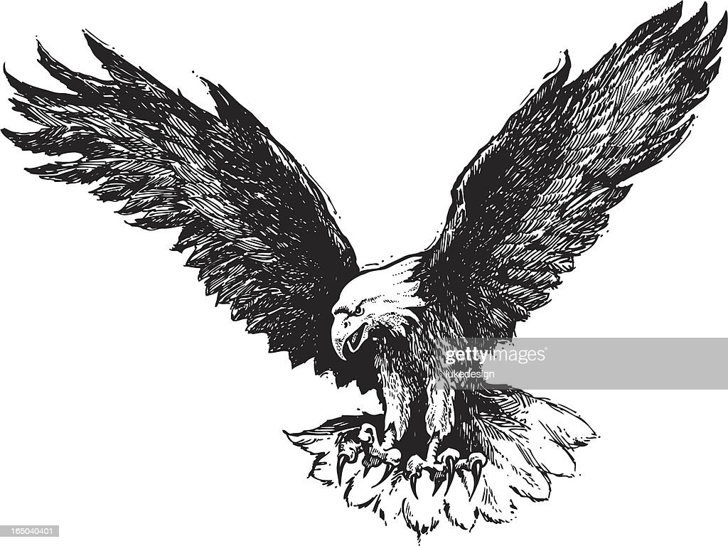 Drawing of a descending bald eagle