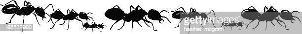 A drawing of black ants on a white background