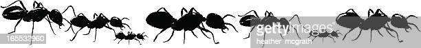 ilustraciones, imágenes clip art, dibujos animados e iconos de stock de ants - hormiga