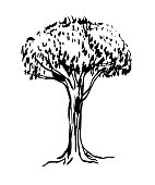 drawing of green deciduous tree graphic sketch vector illustration