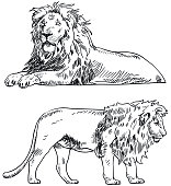 vector drawing lion standing lying down