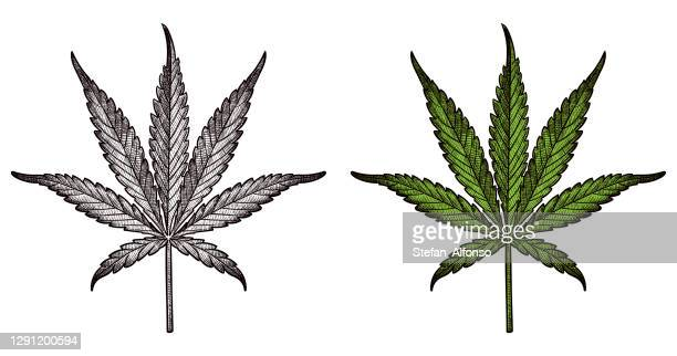 drawing of marijuana leaf - marijuana leaf stock illustrations