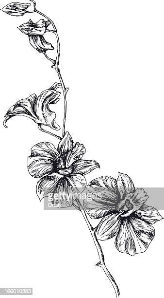 drawing of orchid - single flower stock illustrations