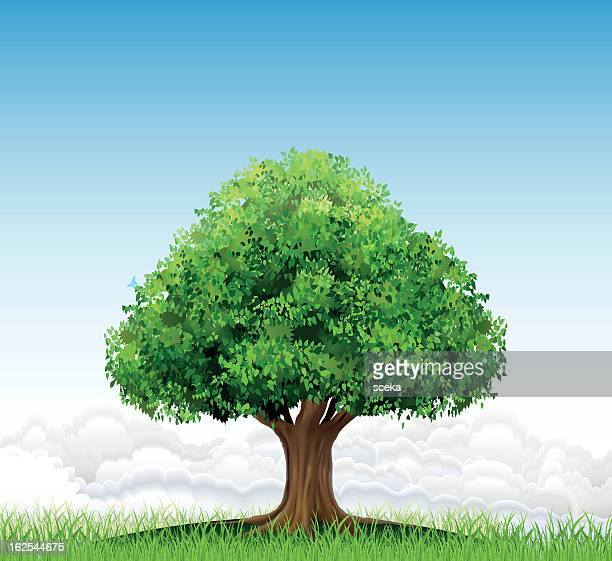 Drawing of single tree on grass in front of blue sky