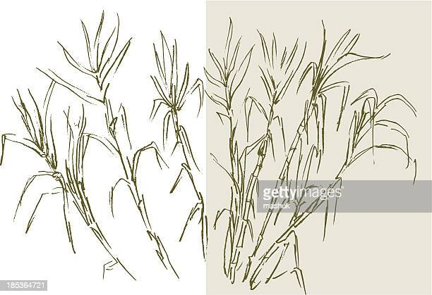 drawing of sugar cane on white and rice color - sugar cane stock illustrations