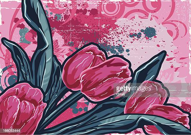 drawing of tulips - lily family stock illustrations