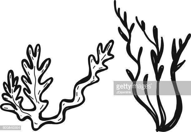 Drawing of two seaweed branches
