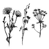 drawing set field flowers, sketch vector illustration