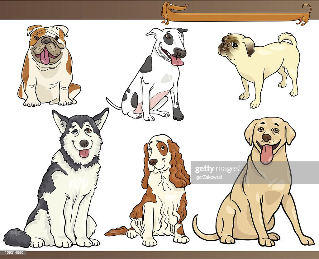 Drawings of six different purebred dogs