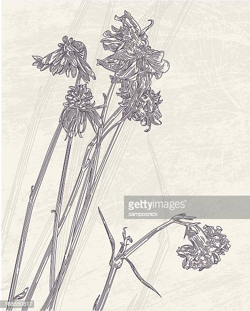 dried flowers - carnation flower stock illustrations, clip art, cartoons, & icons