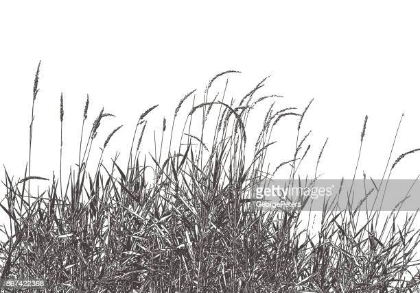 Dried Ornamental Grass