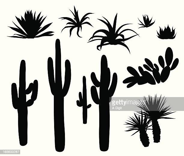 dry climate plants  and cactii vector silhouette - cactus stock illustrations