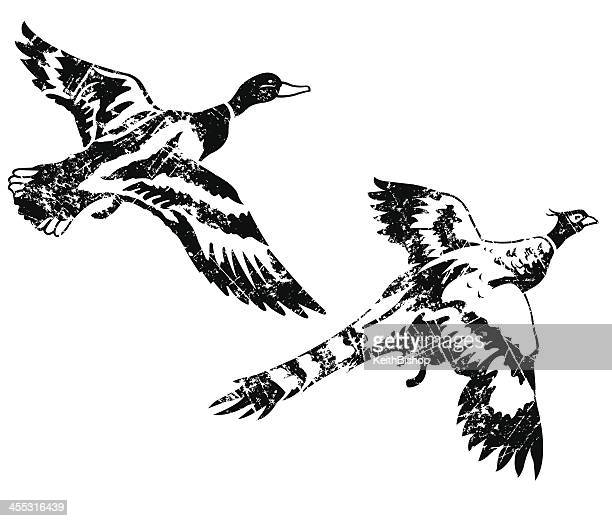 duck and pheasant - game birds weathered grunge style - duck bird stock illustrations