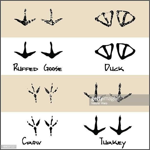 duck - crow - turkey - ruffed goose - duck bird stock illustrations, clip art, cartoons, & icons