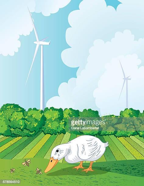 ente essen bugs draußen auf einer farm - hecke stock-grafiken, -clipart, -cartoons und -symbole