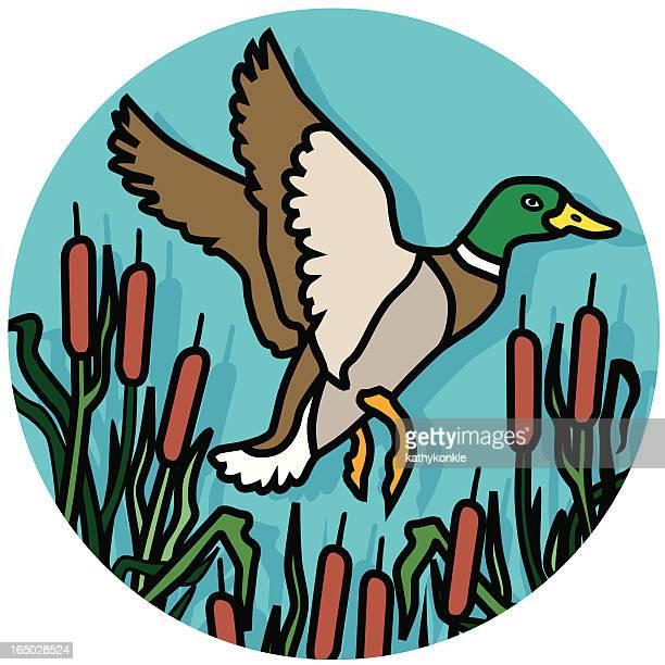 duck flying icon - mallard duck stock illustrations