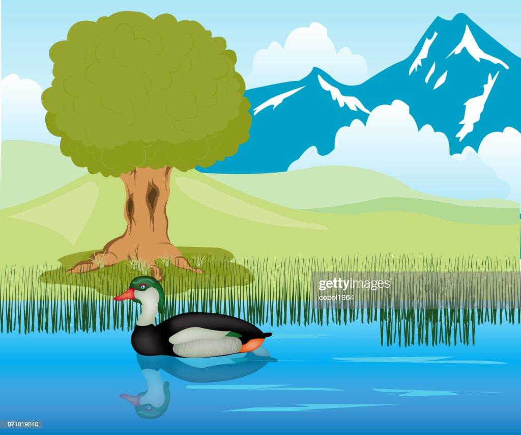 Duck sails in pond