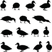 Duck silhouette collection