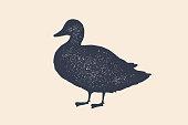 Duck, silhouette. Vintage logo, retro print, poster