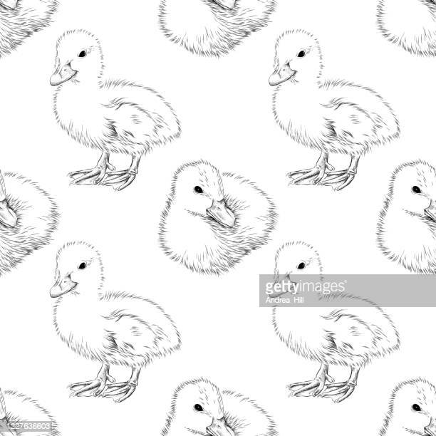 duckling seamless background  - pen and ink vector eps10 illustration - duckling stock illustrations