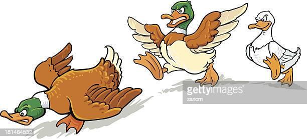 ducks - duck stock illustrations, clip art, cartoons, & icons