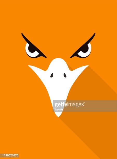 eagle bear face flat icon design. animal icons series, vector illustration - beak stock illustrations