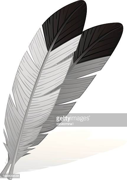eagle feathers - feather stock illustrations
