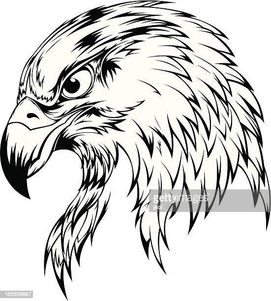 eagle head - falcon bird stock illustrations, clip art, cartoons, & icons