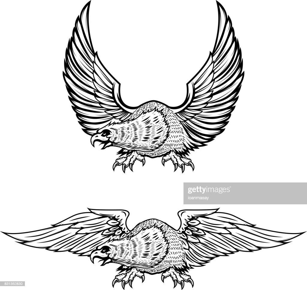 Eagle illustrations isolated on white background.