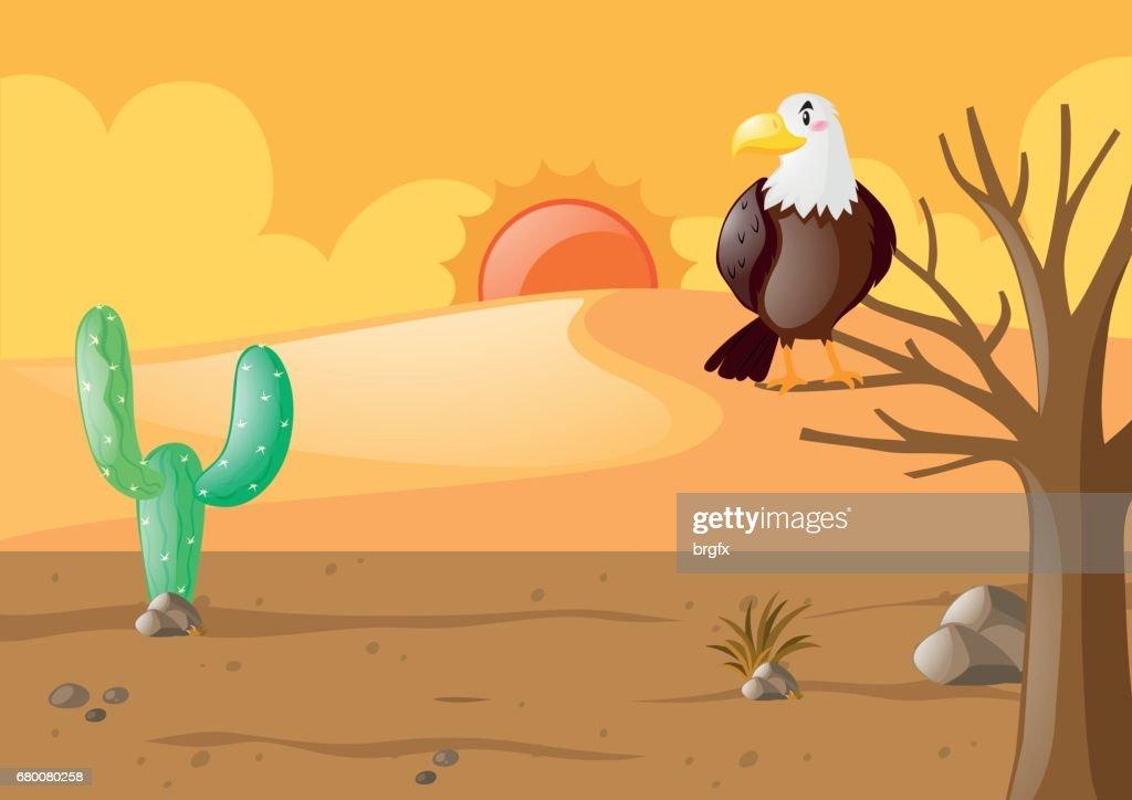 Eagle in the dry desert