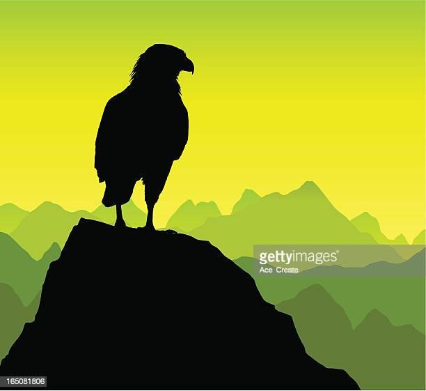eagle on a rocky peak - bird of prey stock illustrations, clip art, cartoons, & icons