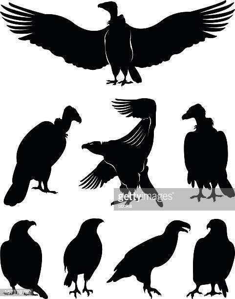 Silhuetas de águia