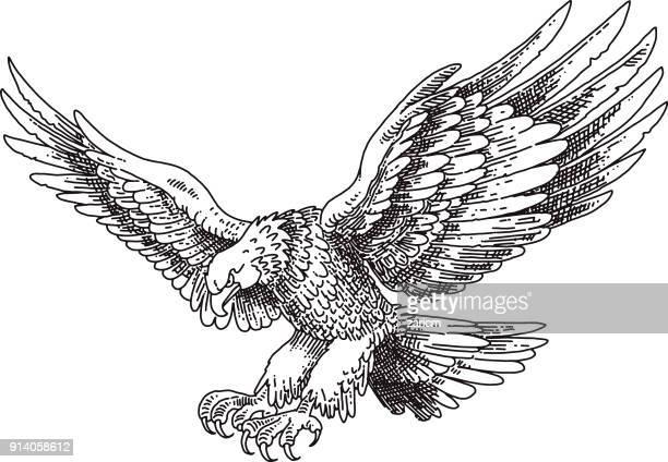 illustrations, cliparts, dessins animés et icônes de eagle  - aigle