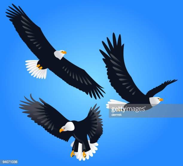 eagle - bird of prey stock illustrations, clip art, cartoons, & icons
