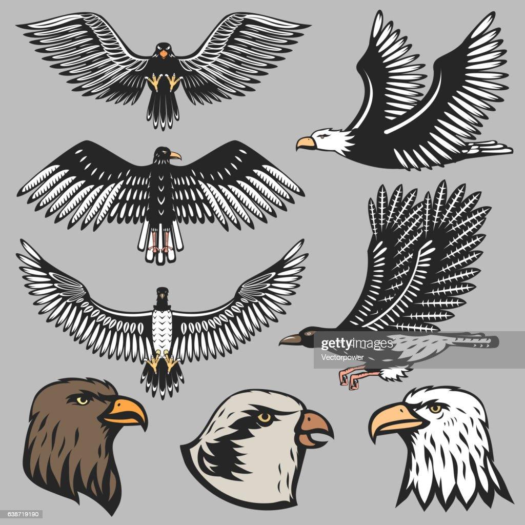 Eagle vector illustration.