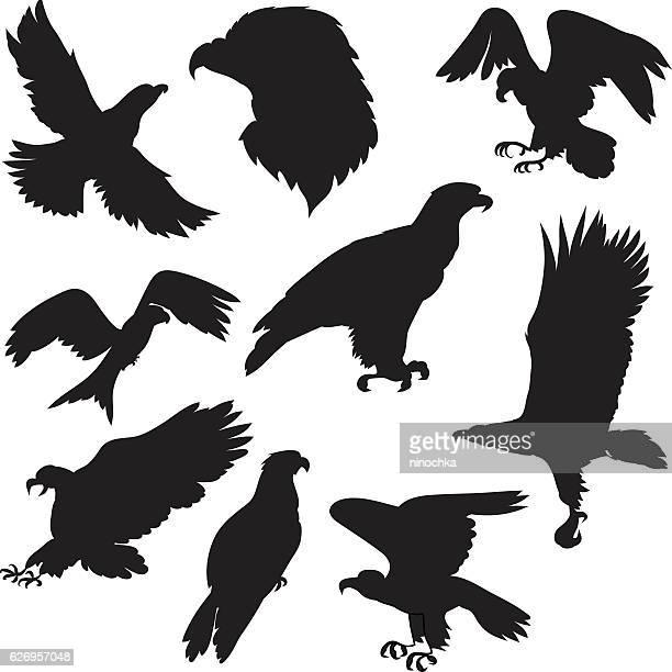 eagles set - hawk bird stock illustrations, clip art, cartoons, & icons