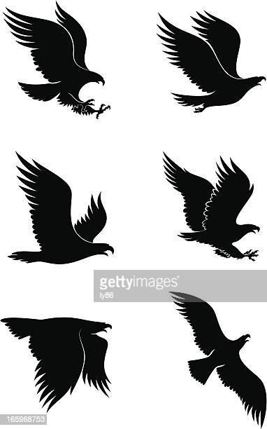 Dessin D Aigle Royal illustrations et dessins animés de aigle royal |