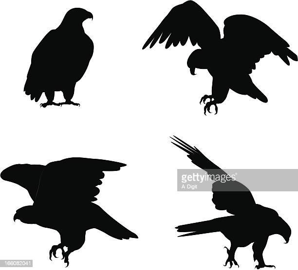 eagles vector silhouette - eagle bird stock illustrations, clip art, cartoons, & icons