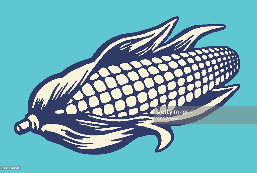 Ear of Corn : stock illustration