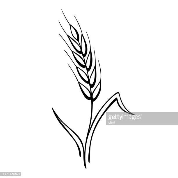 ilustraciones, imágenes clip art, dibujos animados e iconos de stock de oreja de trigo - espiga de trigo