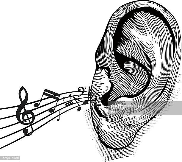 ilustraciones, imágenes clip art, dibujos animados e iconos de stock de ear with music notes - oreja