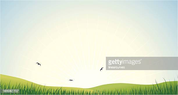 early morning - grass stock illustrations, clip art, cartoons, & icons
